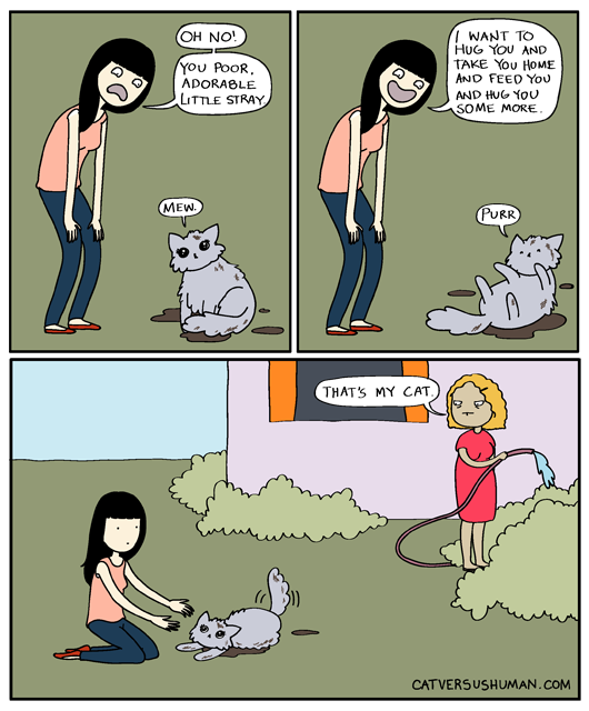 cat shedding season
