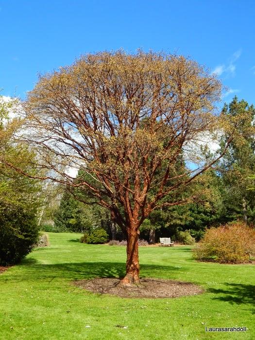 Botanical Gardens Dundee