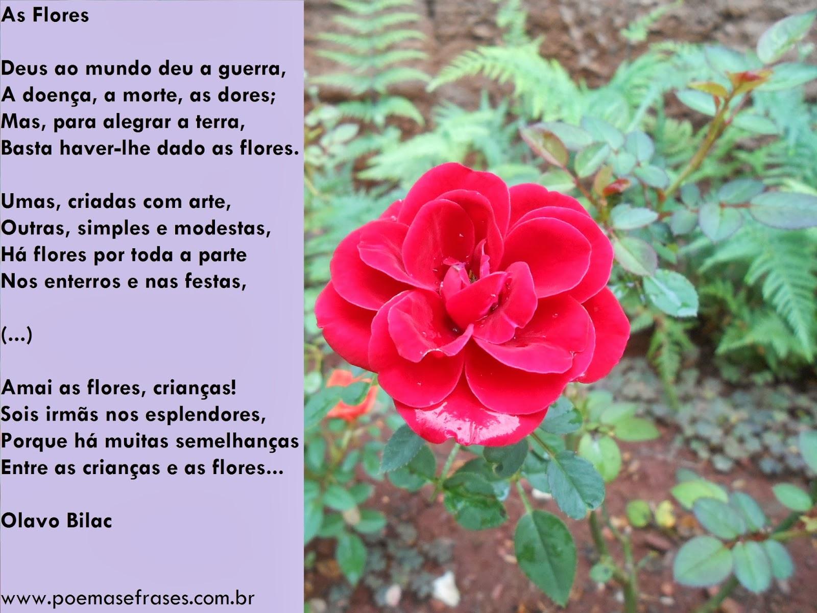 rosas no jardim poema : rosas no jardim poema:Poemas e Frases: Mural de poemas