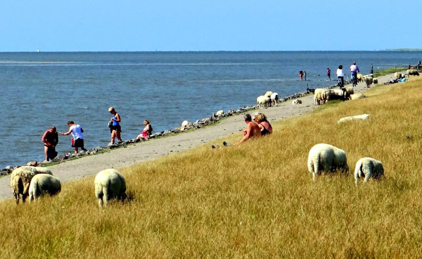 Fahrradtour am Nordseedeich