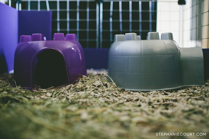 """guinea pig igloo houses"""