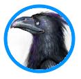 TLJ Crow