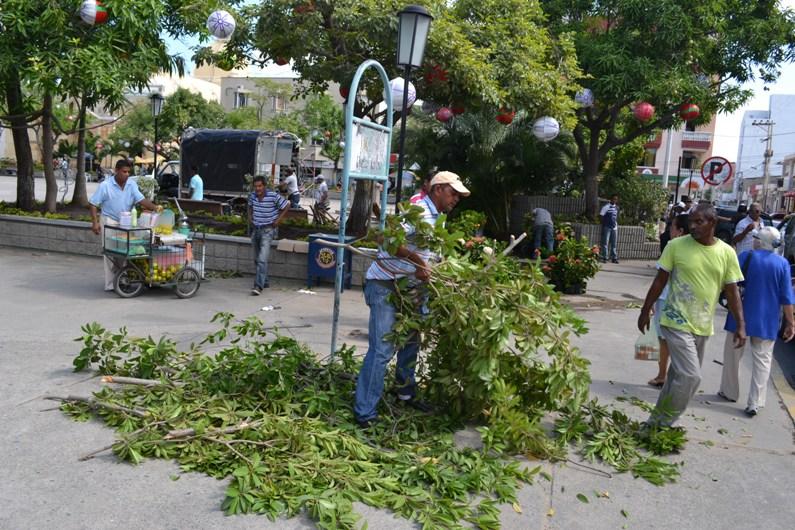 Moradores de la plaza padilla no se explican porque est n destruyendo los rboles frutales la - Cuando se plantan los arboles frutales ...