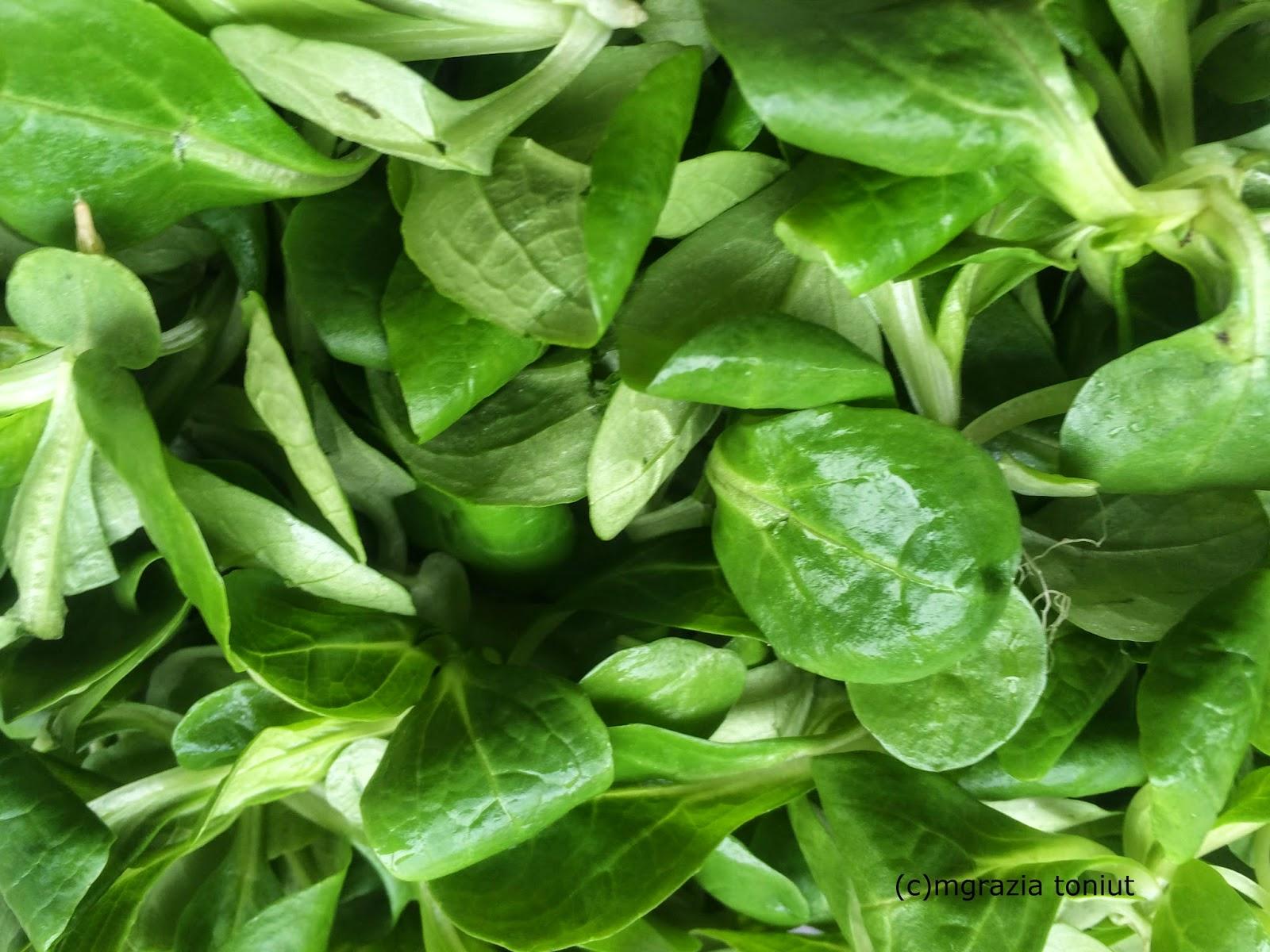 Viaggi e ricette mia ricetta insalata valeriana for Soncino insalata