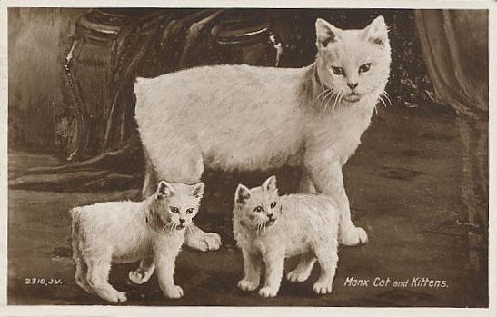 Manx Cat History