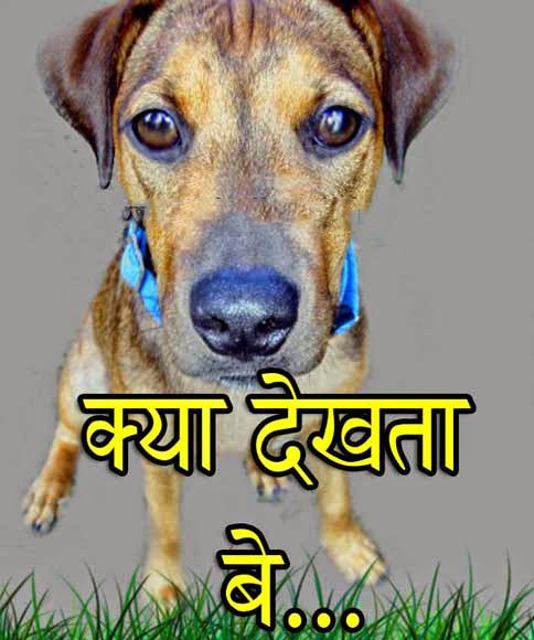 kya dekhta be animal photo