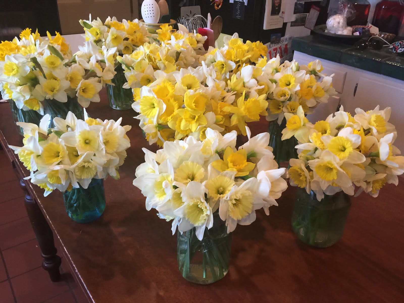 Daffodil Love.....