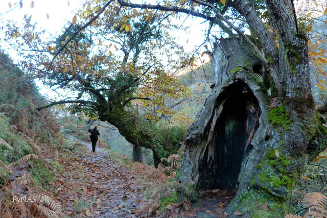 Senda del Río Casaño - Cabrales - Asturias