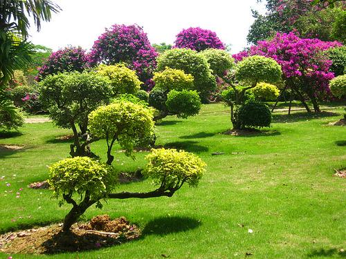 El espiritu de las plantas la belleza de los parques for Jardines naturales