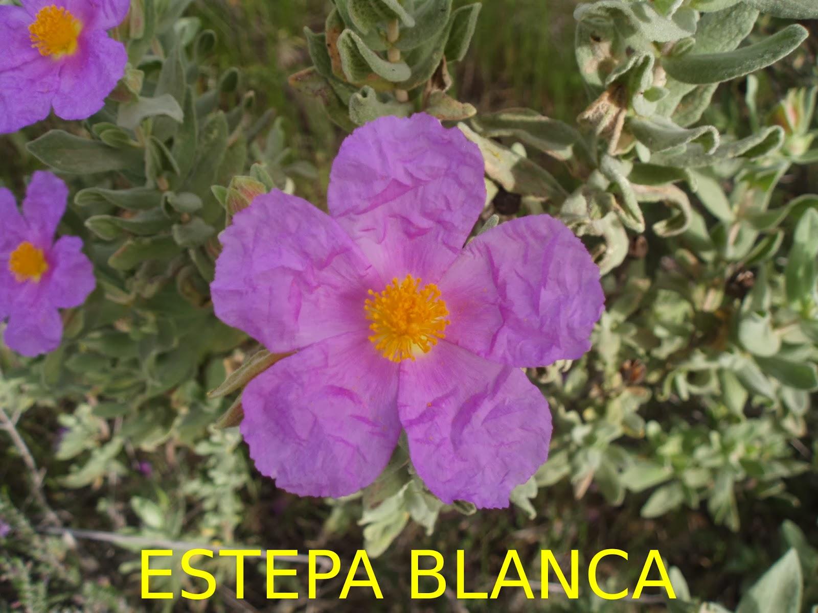 http://edambientalcervantes.blogspot.com.es/p/blog-page.html