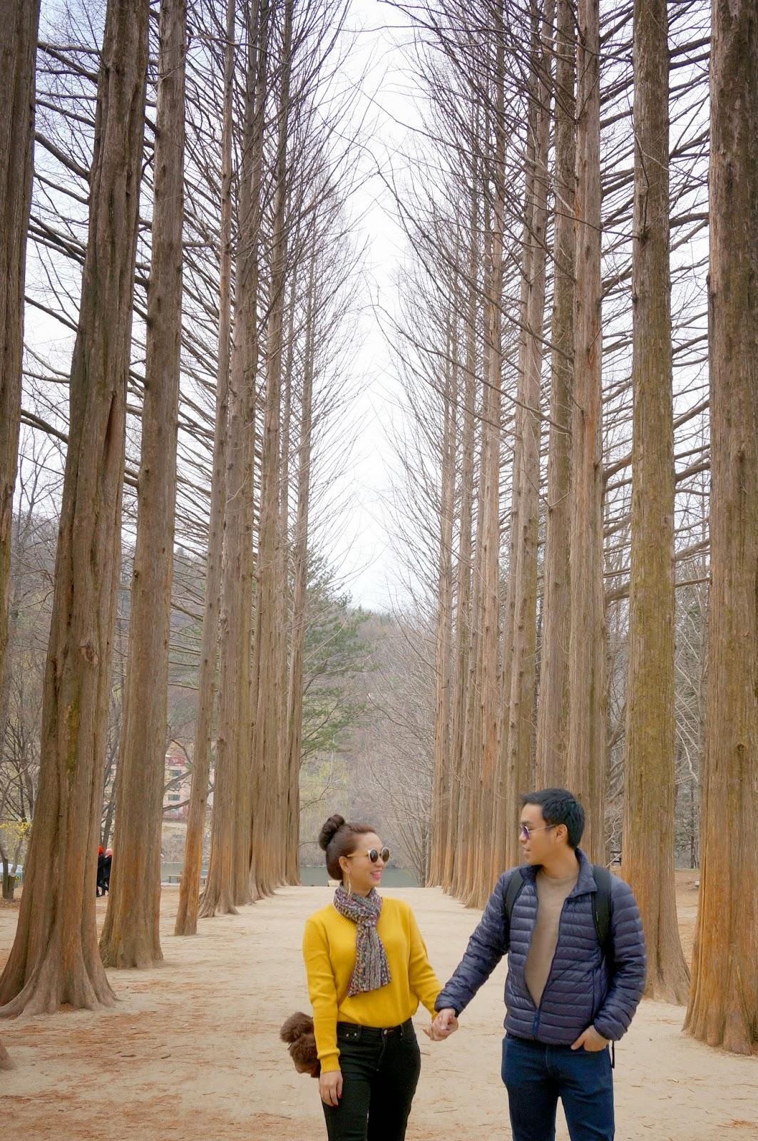 Nami Island Tour From Seoul