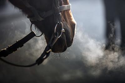 Les maladies respiratoires du cheval