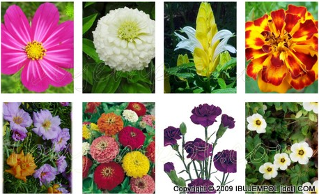 Flower flowers beauty the term paper flowers in indonesia could lead to two different types of flowers that flower types and flower zinnia spp bougenvil or bouganvilea mightylinksfo