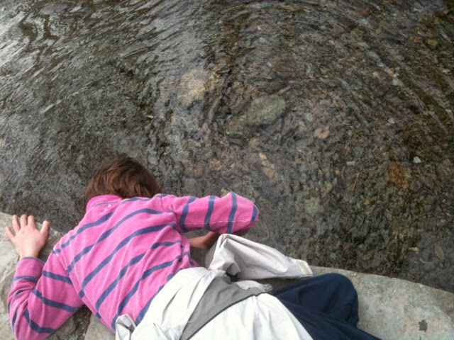 looking for crayfish