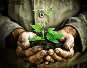 El que siembra, cosecha...