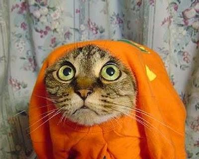 Funny halloween animals 16