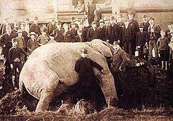 الفيل جامبو لدى وفاته