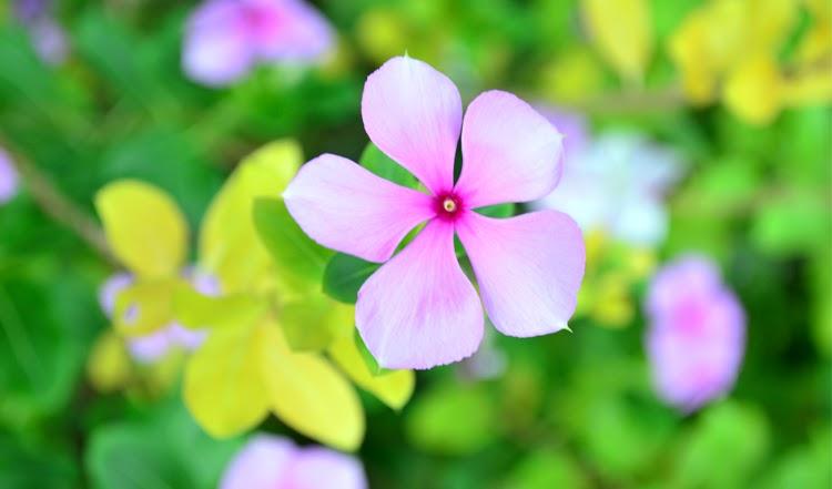 Photoblog: Purple & White Flowers