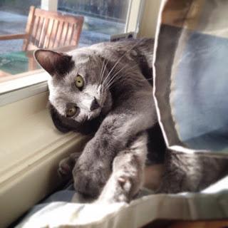 Animasi Bergerak Kucing Lucu Gif Bisa Jadi Walpaper Dan