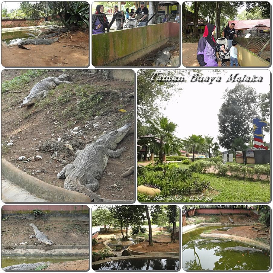 Taman Buaya di Melaka Buaya-buaya di Taman Buaya