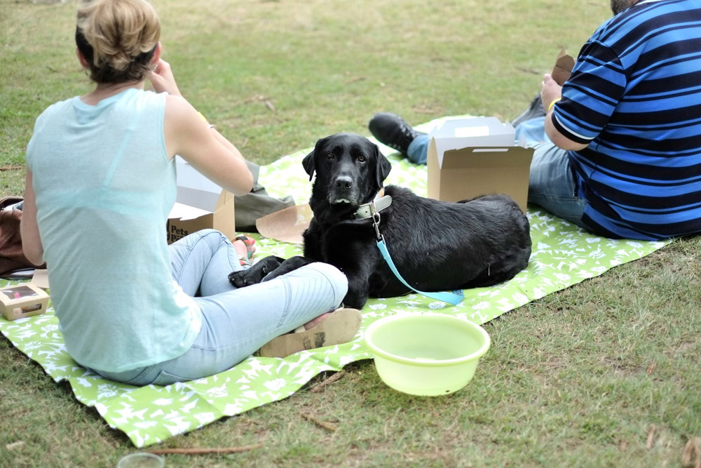 A Labrador pet portrait. Event Photography for Pets In The Park Gala Picnic, Centennial Park Sydney