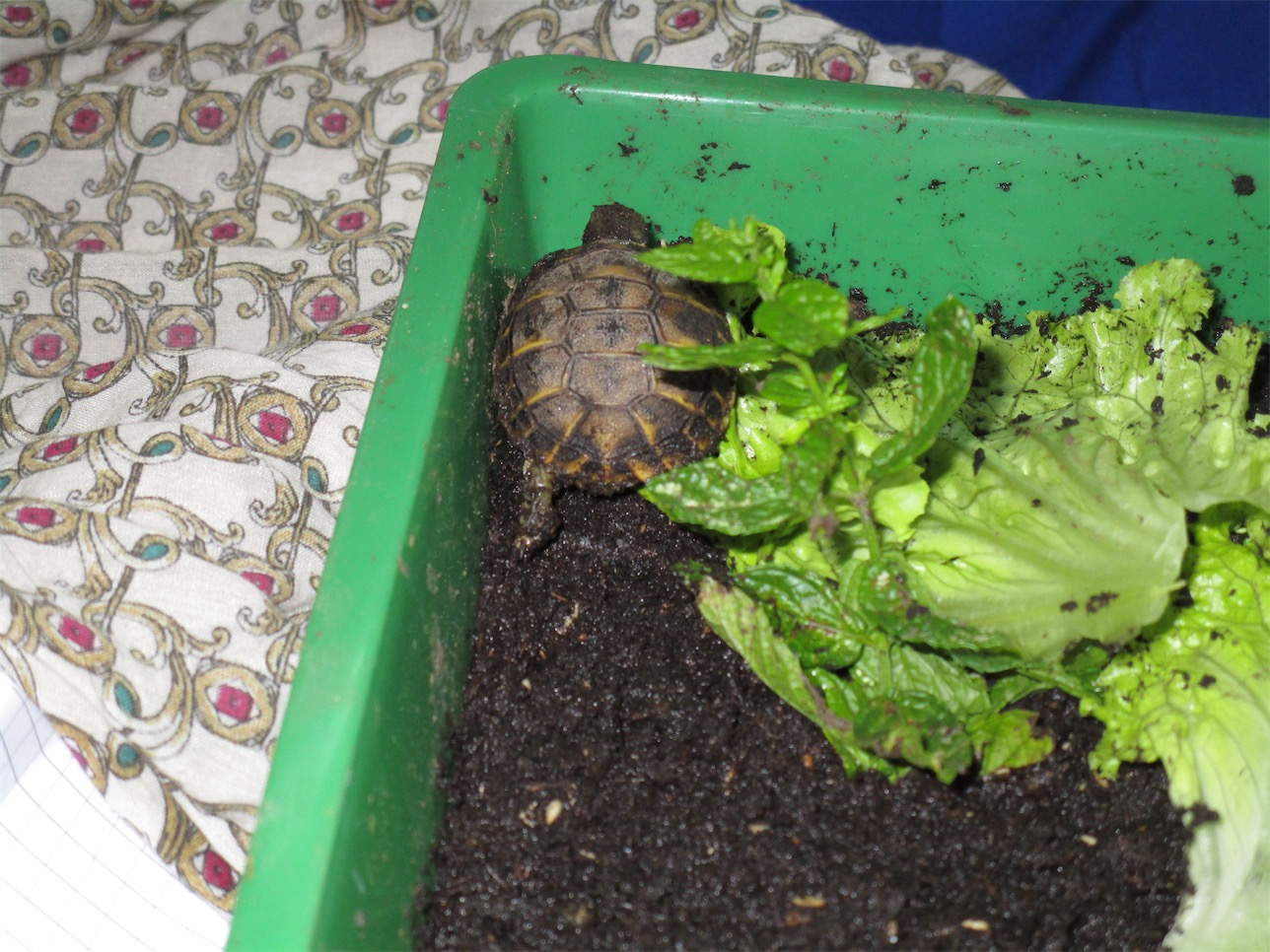 Noi della sezione a la visita delle piccole tartarughe di for Piccole tartarughe di terra