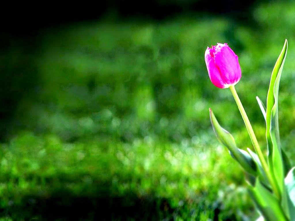 Pink Flower Garden Wallpapers|http://refreshrose.blogspot.com/