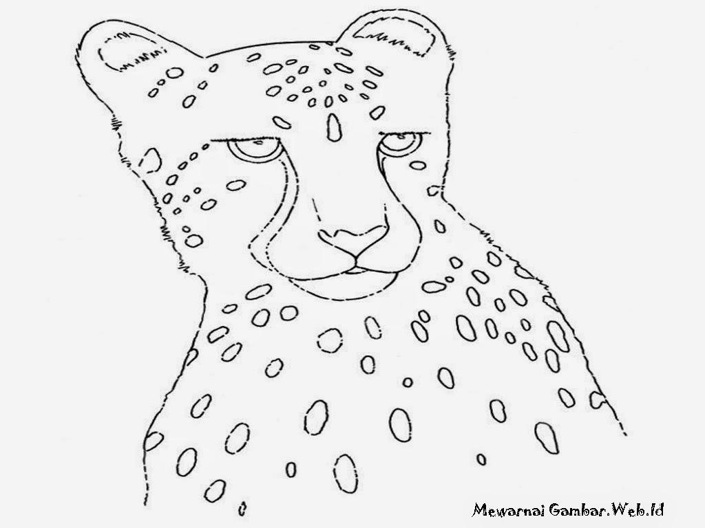 Gambar Cheetah Untuk Diwarnai Gratis