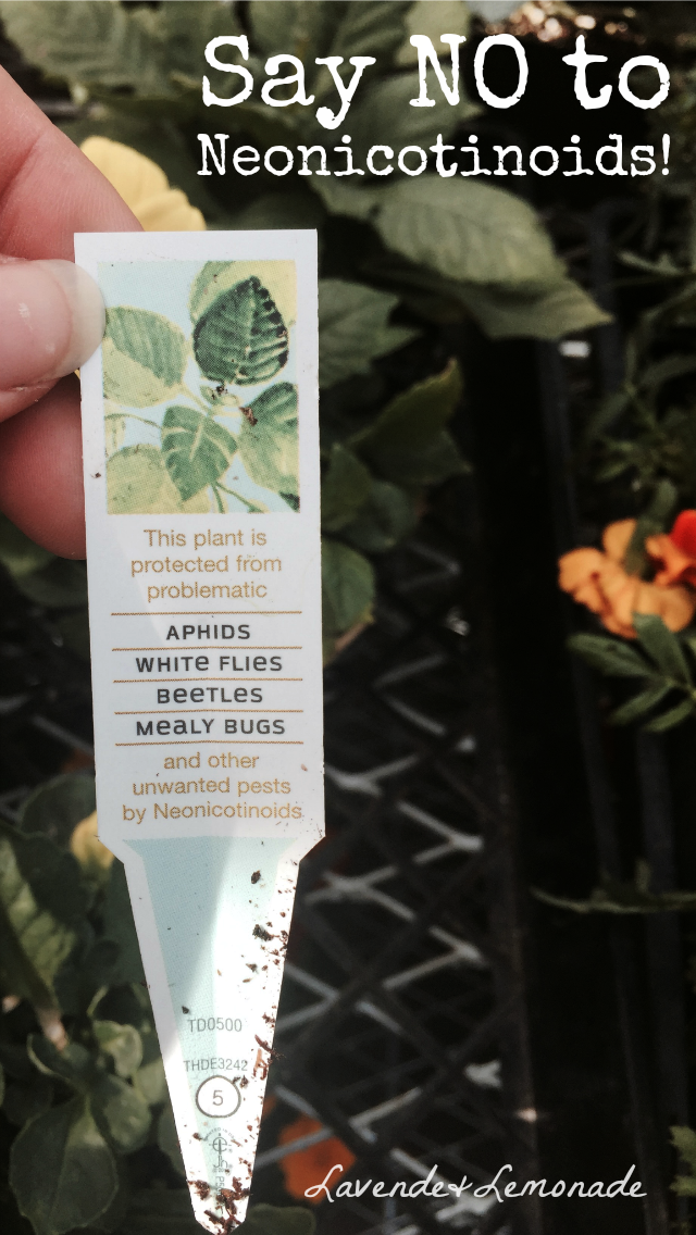 Why I'm NOT buying plants from Home Depot or Lowes