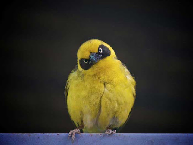 http://1.bp.blogspot.com/-jwFwGrISnjg/ToNlP81g4lI/AAAAAAAAbC4/JHCNTfG1uvk/s1600/Angry%2Bbird.jpg