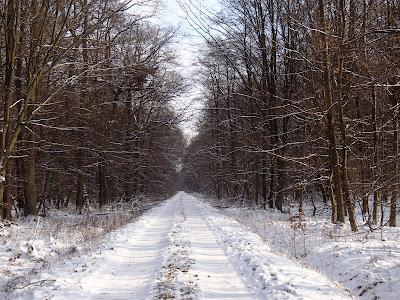 Puszcza Niepołomicka, zima w puszczy, jazda na sankach, zimowy spacer, dzieci w lesie zimą