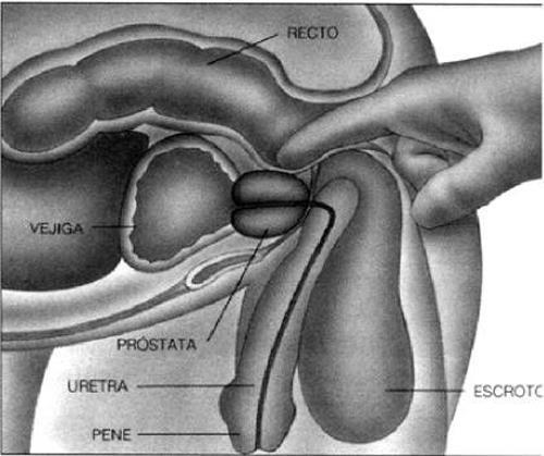 viaje amigo masaje de próstata