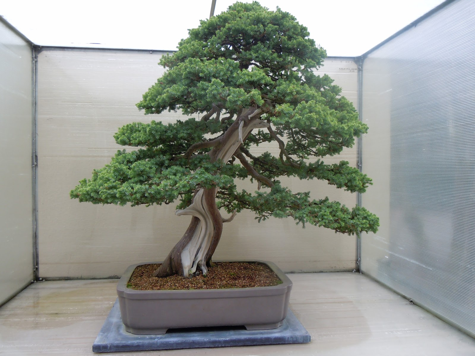 Invent My Universe Bonsai Bn S