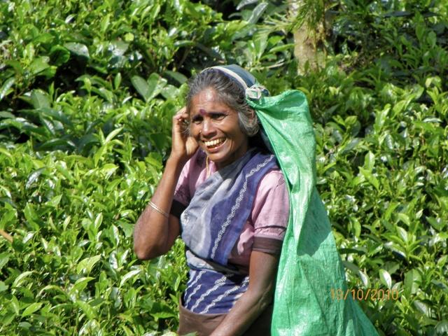 Sonrisa bajo un sol de justicia en una plantación de Té