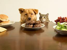 Human Foods to Watch Out For Dogs and Cats