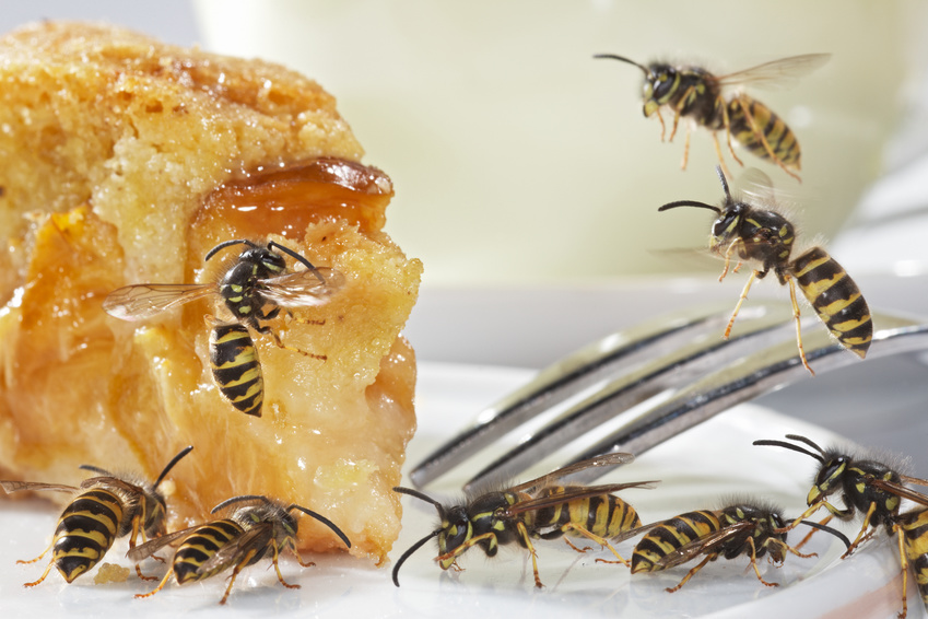 First bakery lowers price for a pound of wasps to below one euro