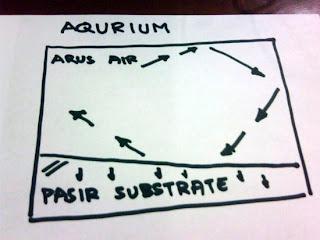 penataan dasar aquascape