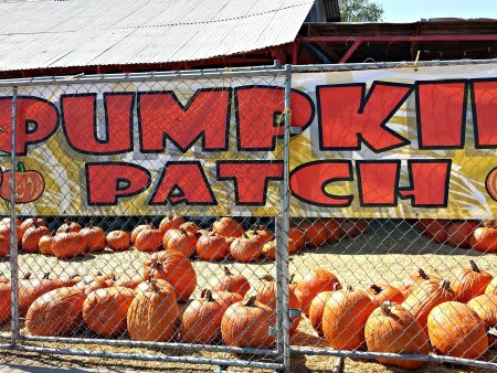 Pumpkin Days at Tolmachoff Farms
