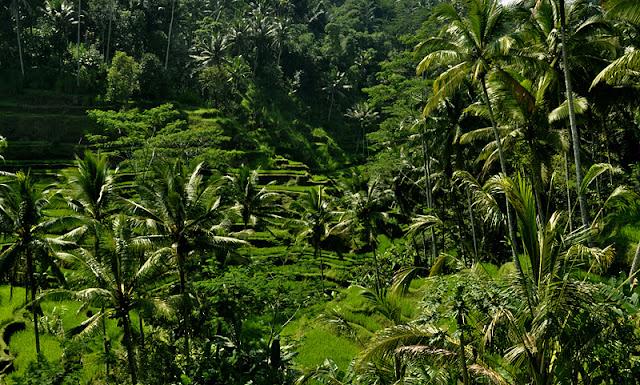 INDONESIA: visitando arrozales y templos por el centro de Bali