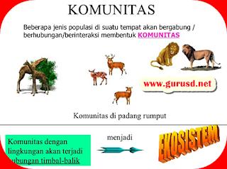 Arti Individu,Populasi, Komunitas Dan Ekosistem