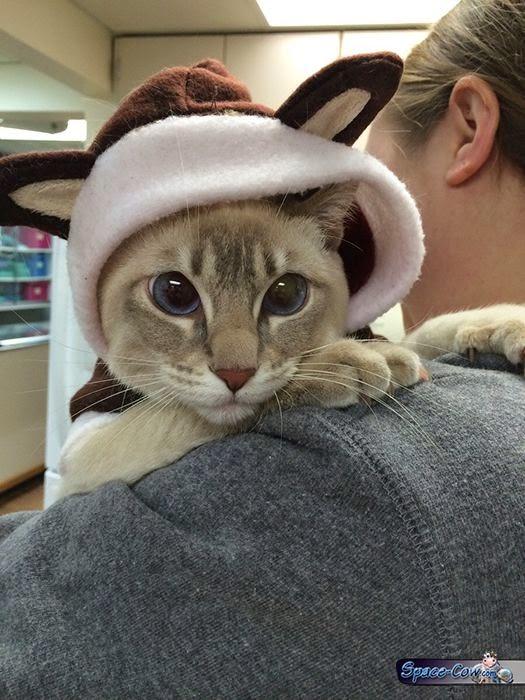 funny cute eyes cat