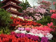 Imagem Flores (imagens de paisagens de flores )