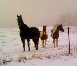 Winter Medium Weight Horse Blankets