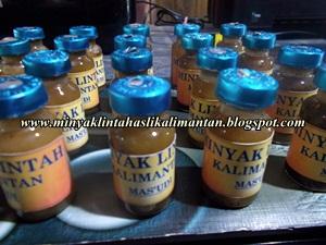 minyak lintah asli kalimantan