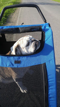 Perfect stroller for pets!