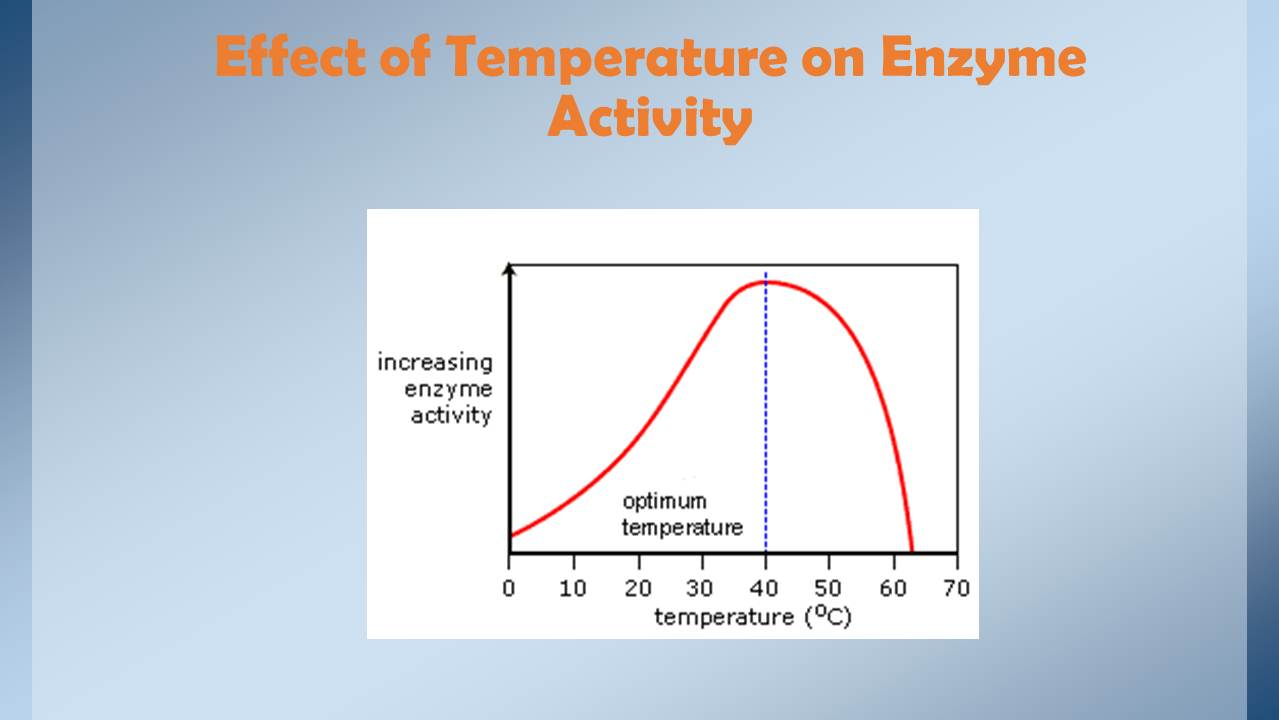 effect temperature has enzyme activity How does temperature affect enzyme activity what is the effect of temperature on enzyme activity what are the factors that affect enzyme activity.