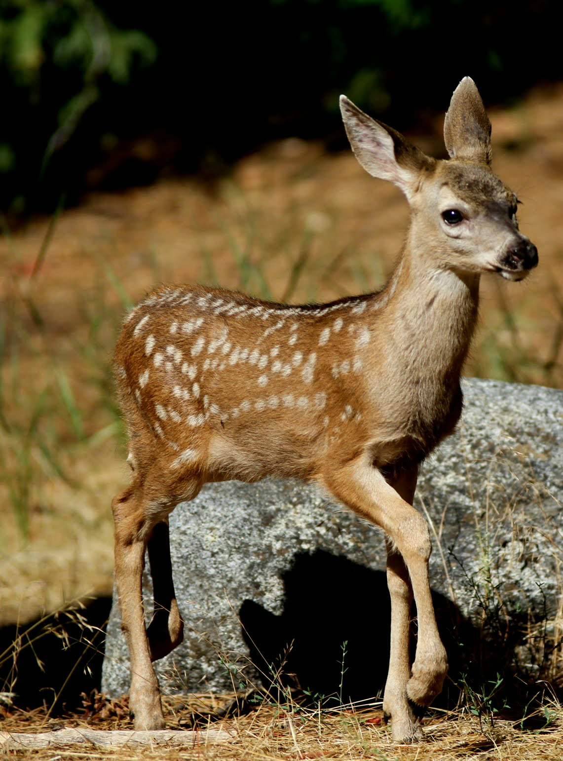 Yosemite National Park Is Requesting Help From Visitors To Protect Newborn Animals In The During Summer Months Many Baby Birds Fawns