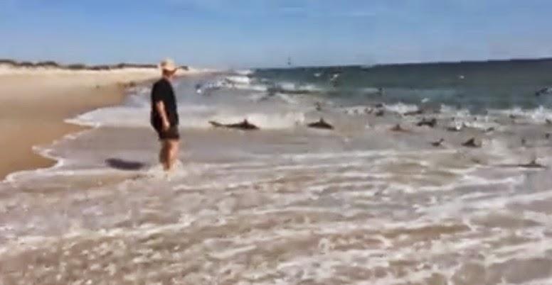 Sharknado in NC