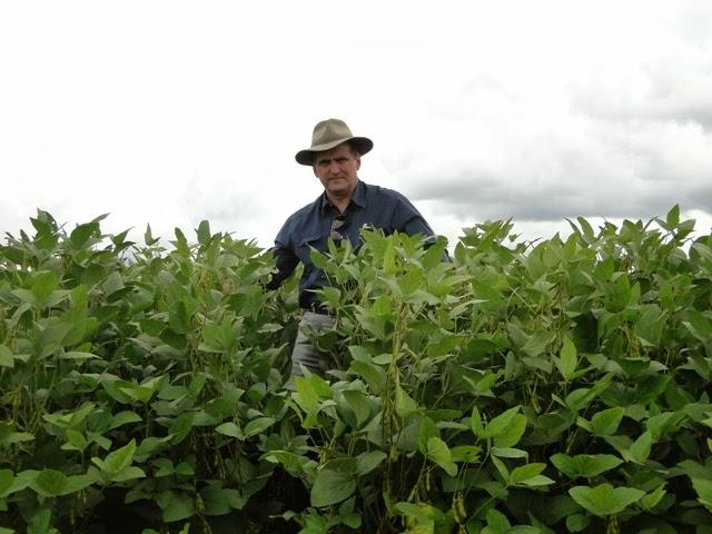 Maranhão é destaque na produção de soja