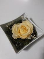 Rosas Crema Naturales Preservadas ¡Duran 4 Años! Santa Ana, El Salvador